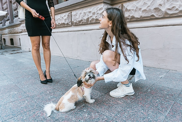 subaito-pet-sitters-near-me-two