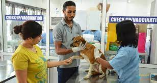 PET CARE ANIMAL HOSPITAL -subaito-2