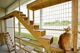 CAT BOARDING-subaito-2