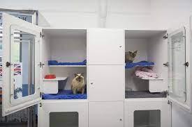 CAT BOARDING-subaito-4