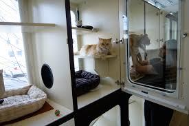 CAT BOARDING-subaito-6