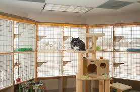 CAT BOARDING-subaito-7