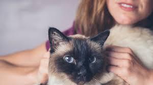 CAT SITTER-subaito-5
