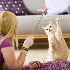 CAT SITTER-subaito-6