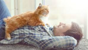 CAT SITTER-subaito-7