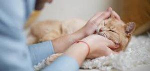 CAT SITTING -subaito-1
