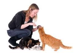 CAT SITTING -subaito-3