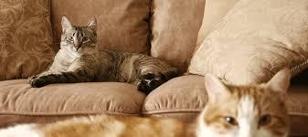CAT SITTING -subaito-5