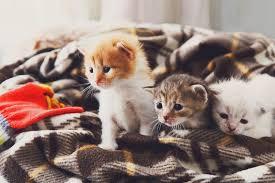 CAT SITTING -subaito-8