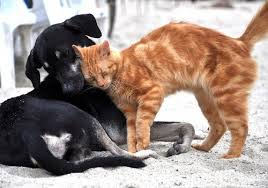 HOW TO TELL IF A DOG IS AGGRESSIVE TOWARDS CATS-subaito-2