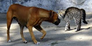 HOW TO TELL IF A DOG IS AGGRESSIVE TOWARDS CATS-subaito-3