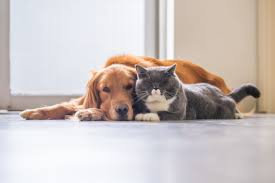 HOW TO TELL IF A DOG IS AGGRESSIVE TOWARDS CATS-subaito-4