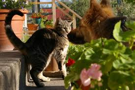 HOW TO TELL IF A DOG IS AGGRESSIVE TOWARDS CATS-subaito-5