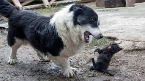 HOW TO TELL IF A DOG IS AGGRESSIVE TOWARDS CATS-subaito-6